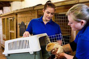 Land & Animal Sciences