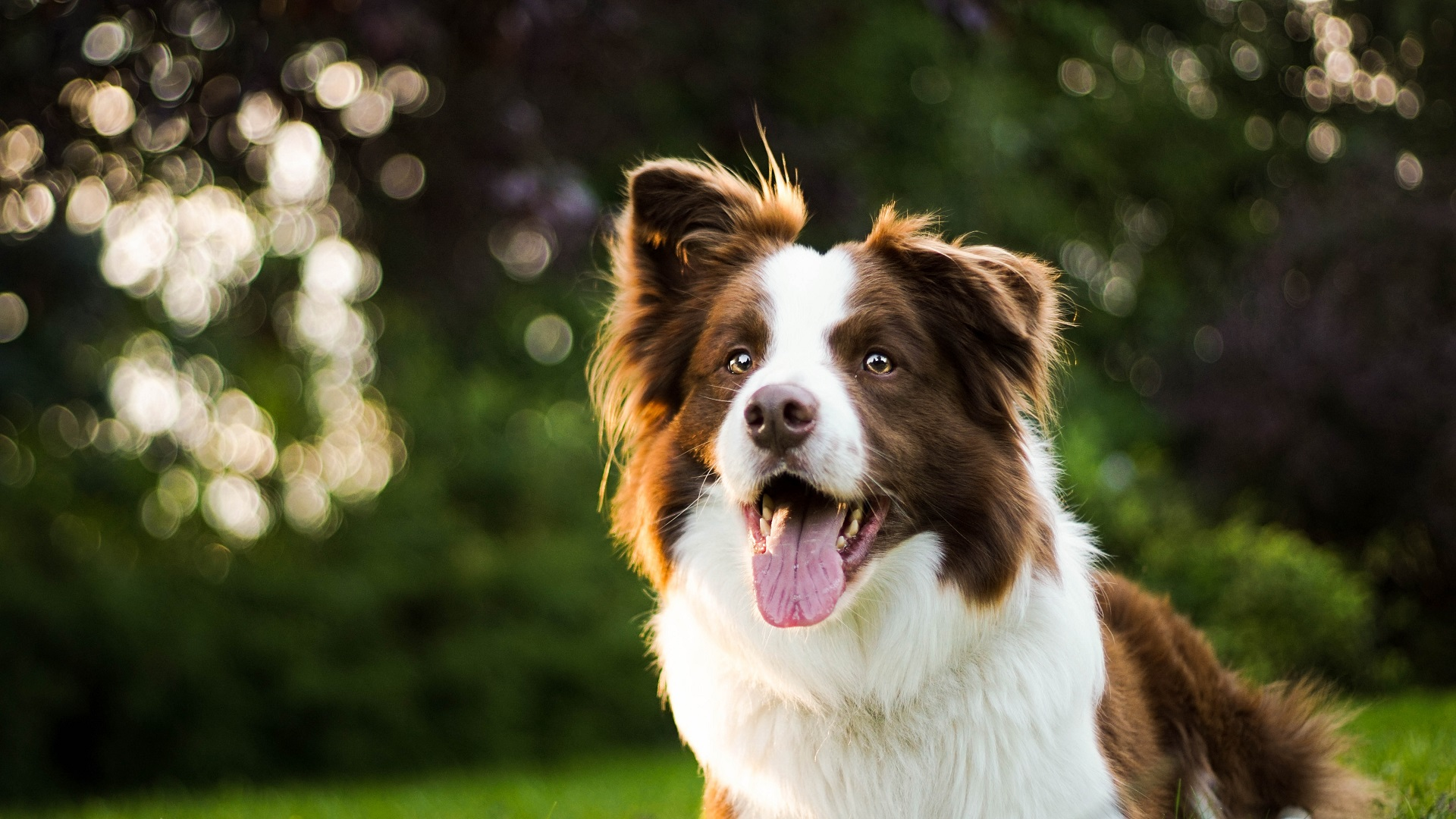 Dog Walking and Pet Sitting for Professionals