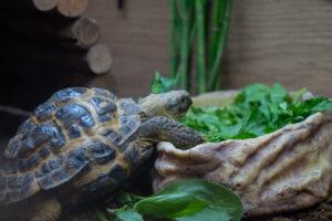 A tortoise next some green vegetation