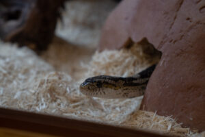 A snake at Temple Newsam